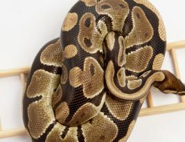 Property Snake